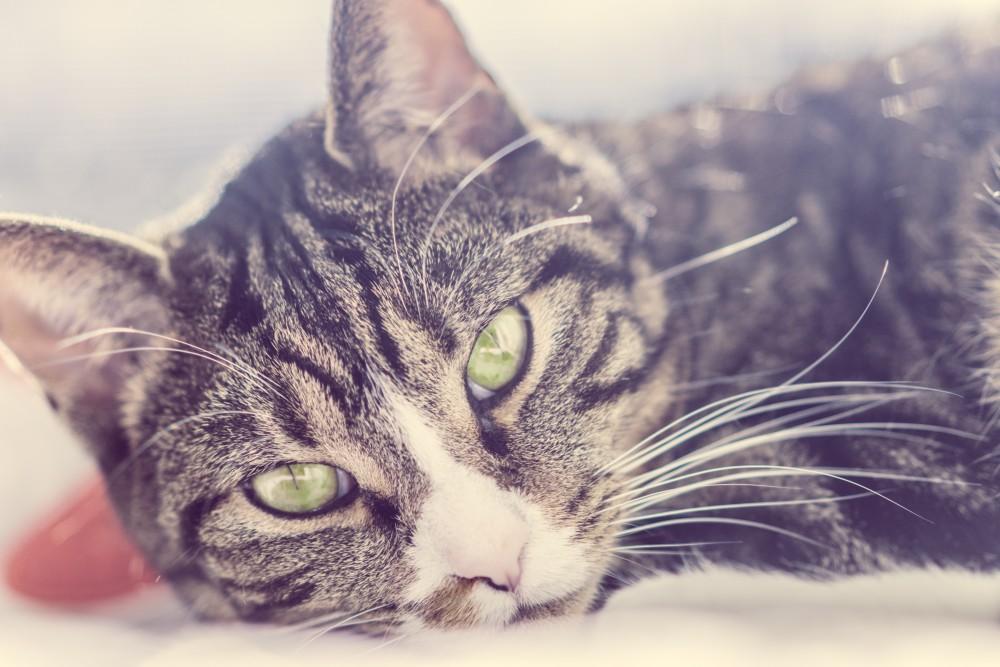 Velká tlustá harry kočička