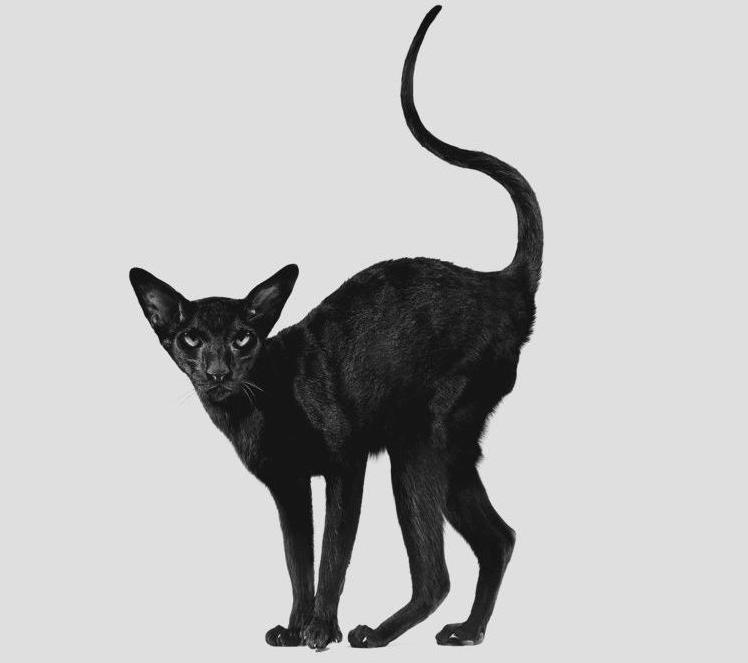 Velká huňatá kočička